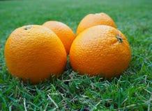 Cuatro naranjas en césped verde Fotos de archivo