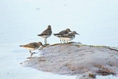 Cuatro pájaros en la playa fotografía de archivo libre de regalías