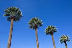 Cuatro palmeras contra un cielo azul Fotografía de archivo libre de regalías
