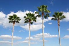 Cuatro palmeras en fila Imágenes de archivo libres de regalías