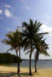 Cuatro palmeras en una playa Imagenes de archivo