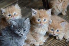 Cuatro pequeños gatitos lindos imagen de archivo libre de regalías