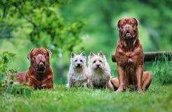 Cuatro perros Imagen de archivo libre de regalías