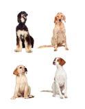 Cuatro perros de diverso sentarse de las razas fotos de archivo