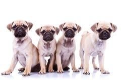 Cuatro perros de perrito de las fregonas Fotografía de archivo libre de regalías