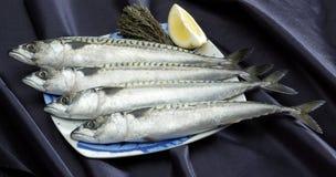 Cuatro pescados   Fotografía de archivo libre de regalías