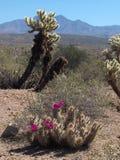 Cuatro picos, Arizona Imagen de archivo libre de regalías