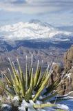 Cuatro picos y agavos Nevado Imagen de archivo libre de regalías