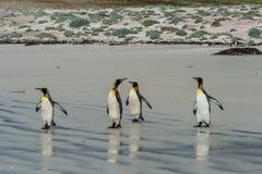Cuatro pingüinos de rey que se colocan en la playa arenosa Fotografía de archivo