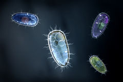 Cuatro protozoons coloridos u organismo unicelular Fotos de archivo libres de regalías