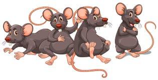 Cuatro ratas con la piel gris ilustración del vector