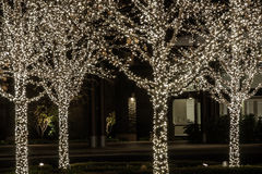 Cuatro árboles con las luces blancas del día de fiesta Fotografía de archivo
