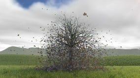 Cuatro seassons de un árbol libre illustration
