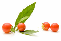 Cuatro tomates de cereza Fotografía de archivo