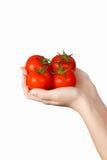 Cuatro tomates rojos frescos en manos imagenes de archivo