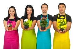 Cuatro trabajadores del florista que muestran las plantas fotos de archivo libres de regalías