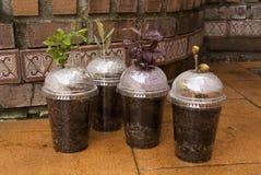 Cuatro variedades del árbol en propagadores hechos en casa del resbalón Fotografía de archivo libre de regalías
