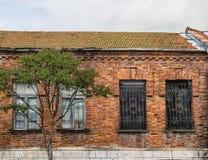 Cuatro ventanas y árboles Imágenes de archivo libres de regalías