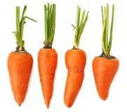Cuatro zanahorias anaranjadas imperfectas orgánicas enteras crudas aisladas foto de archivo libre de regalías