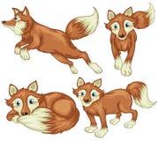 Cuatro zorros ilustración del vector