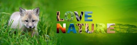 Cub αλεπούδων με τη φύση αγάπης κειμένων Στοκ εικόνες με δικαίωμα ελεύθερης χρήσης