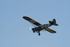 cub αυλητής πτήσης έξοχος Στοκ φωτογραφία με δικαίωμα ελεύθερης χρήσης