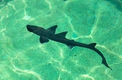 cub καρχαρίας στοκ εικόνες