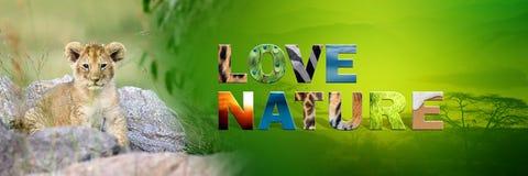 Cub λιονταριών με τη φύση αγάπης κειμένων Στοκ φωτογραφία με δικαίωμα ελεύθερης χρήσης