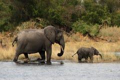 cub μητέρα ελεφάντων Στοκ Φωτογραφία