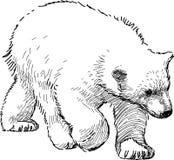 Cub πολικών αρκουδών Στοκ φωτογραφίες με δικαίωμα ελεύθερης χρήσης