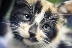 Cub cat portrait Stock Photo
