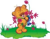 Cub di orso Immagine Stock