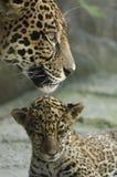 Cub e madre Fotografie Stock Libere da Diritti