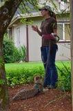 Cub ed addestratore del ghepardo Fotografia Stock