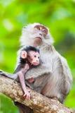 CUB eines Affen mit Mutter auf einem Baum Stockbilder