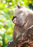 CUB eines Affen mit Mutter Stockfotografie