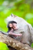 CUB eines Affen mit Mutter Stockfotos
