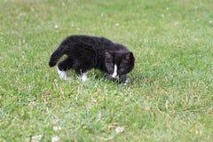 Cub kitten. Family darling little kitten hunts royalty free stock image