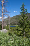 Cub lake in Rocky Mountains Royalty Free Stock Images