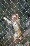 Cub of the monkey in a cage Stock Images