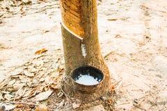 Cub of rubber liquid Stock Photos