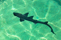 Cub shark. In an aquarium Stock Images