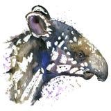 Cub Watercolor tapir Στοκ Φωτογραφία