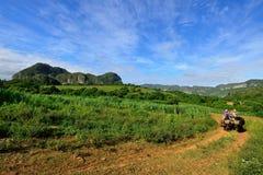 Cuba, agricoltore in Valley de Vinales Immagini Stock