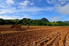 Cuba, agricoltore in Valley de Vinales Immagini Stock Libere da Diritti