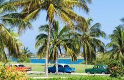 Cuba american Oldtimers praked under palms Royalty Free Stock Image