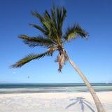 Cuba beach. Cuba - Caribbean beach Cayo Guillermo. Sandy coast and coconut palm tree. Jardines del Rey region. Square composition Royalty Free Stock Image