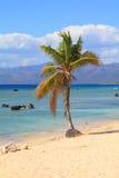 Cuba beach. Landscape - palm tree at Ancon Beach, Trinidad Royalty Free Stock Photo