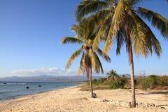 Sandy beach in Cuba. Cuba beach landscape - palm trees at Ancon Beach, Trinidad Royalty Free Stock Images
