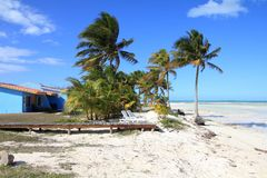 Cuba beach. Landscape - palm trees in Cayo Guillermo (Jardines del Rey Stock Photography